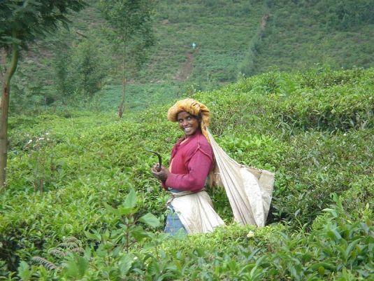 20_Tea garden